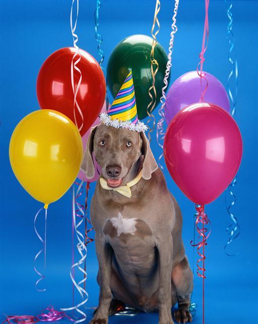 dog-balloons